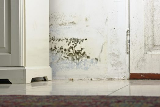 mold stains